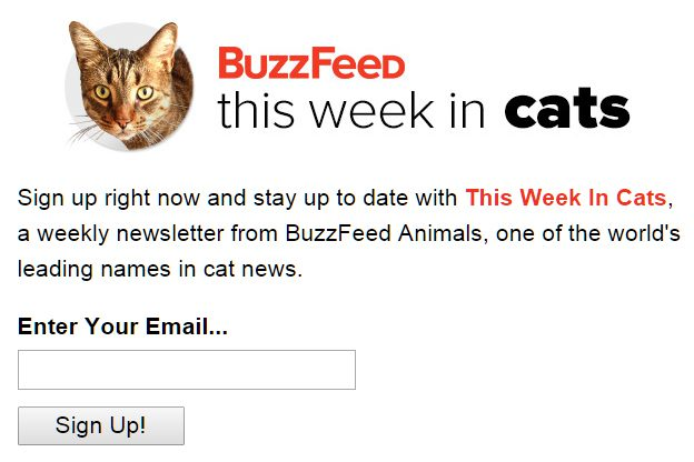 buzzfeed's this week in cats